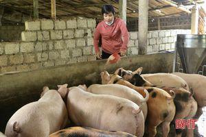 Tấm gương làm kinh tế giỏi của phụ nữ miền núi Hà Tĩnh