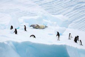 Thuyết âm mưu: Người xưa xây kim tự tháp ở Nam Cực