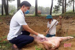 Vũ Quang tiêu hủy gần 3 tấn lợn dương tính với dịch tả lợn châu Phi