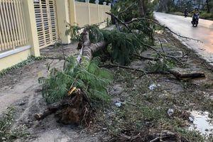 Một nữ điều dưỡng bị cây đè chết trong cơn mưa chiều 2-4