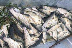 Khoảng 30 tấn cá chết bất thường ở xã Nghi Sơn (Thanh Hóa)