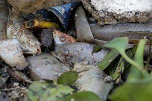Mỏi tay vớt xác cá ở kênh Nhiêu Lộc - Thị Nghè