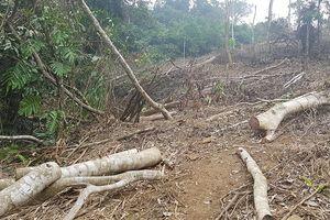 Kỷ luật cán bộ để xảy ra chặt phá rừng đặc dụng Vườn quốc gia Xuân Sơn