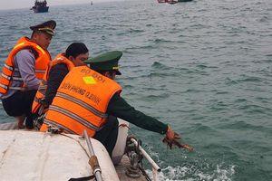 'Giải cứu' tôm hùm non thả trở lại biển