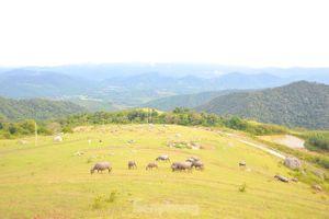 Mê mẩn vẻ đẹp thảo nguyên xanh mướt với những khối đá kỳ lạ ở Bắc Giang