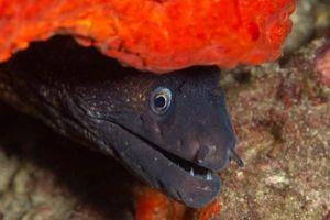Bắt được thủy quái khổng lồ mệnh danh thần chết ẩn nấp dưới san hô