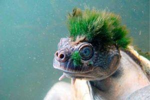 Những loài động vật nào 'hiếm có, khó tìm' trên trái đất?
