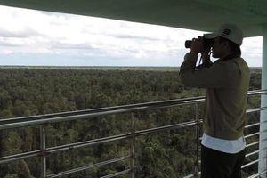 Rừng U Minh: Nỗi lo mùa khô hạn