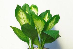 7 loại cây vô cùng dễ trồng, giúp mệnh Mộc rước tài lộc vào nhà