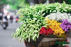 Hà Nội mùa hoa loa kèn về trên phố