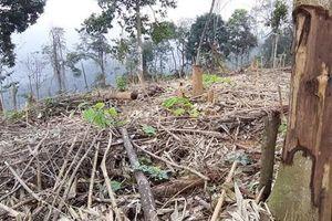 Kỷ luật cán bộ để xảy hàng trăm m2 rừng tự nhiên bị 'triệt hạ'