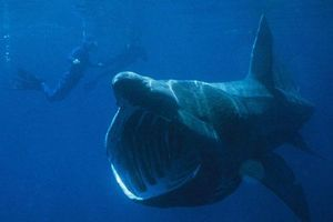 Top 10 động vật có bề ngoài xấu xí nhưng 'lành tính' nhất thế giới
