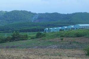 Công ty Bình Hà xin 'hồi sinh' dự án chăn nuôi bò