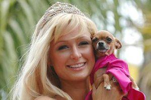 Paris Hilton mạnh tay chi 350 ngàn USD xây biệt thự cho cún cưng