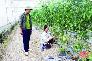 Thu hút doanh nghiệp đầu tư phát triển nông nghiệp
