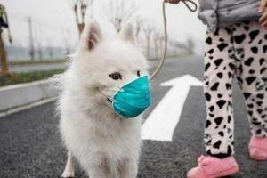 WHO xác nhận SARS-CoV-2 lây từ người sang động vật
