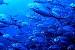 Biến đổi khí hậu tác động luồng di chuyển của các loài sinh vật biển