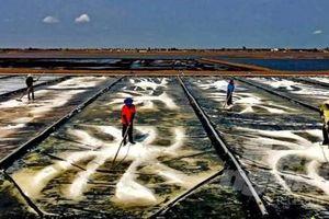Cần quy hoạch vùng sản xuất muối Bạc Liêu