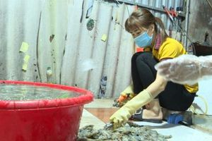 Bắt quả tang cơ sở bơm tạp chất vào tôm tại Hà Nội