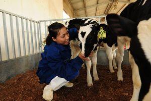 Hạnh phúc đích thực của bò sữa TH true MILK