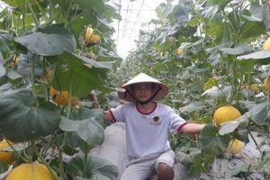 Về quê trồng rau sạch '5 không' công nghệ cao