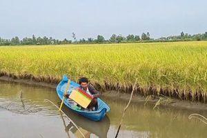 Xu hướng nông nghiệp hữu cơ cho vùng lúa - tôm