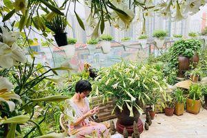 Hoa loa kèn vào mùa siêu rẻ, 'mãn nhãn' khu vườn nghìn bông của người phụ nữ Hà Nội