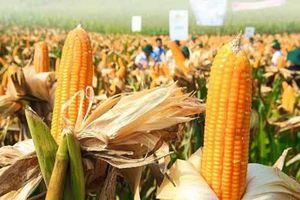 Một bước chuyển thế kỷ, nông dân Việt có thêm 19 tỷ USD