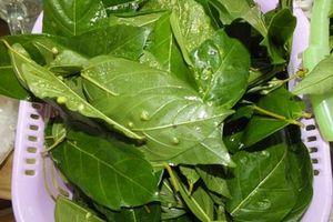 Chỉ cần lá này trong nhà cả đời không lo mắc bệnh gan, đánh tan mất ngủ và nhiều bệnh khác