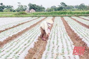 Nhân rộng những mô hình khuyến nông đạt hiệu quả kinh tế cao