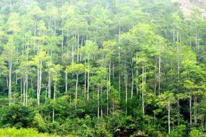 Quan niệm và hành vi bảo tồn tài nguyên thiên nhiên của người xưa