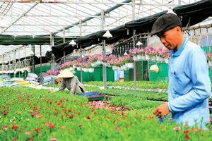 Ứng dụng công nghệ cao trong canh tác hoa, hoa giống