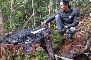 Xử lý trách nhiệm người đứng đầu 4 chủ rừng ở Lâm Đồng