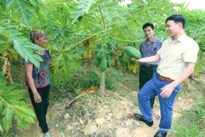 Kinh tế huyện Sóc Sơn tăng trưởng 8,36% trong quý I/2021
