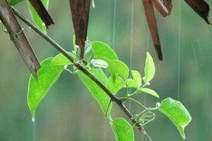 Dự báo thời tiết hôm nay 9/4: Nhiều nơi có mưa và xuất hiện sét