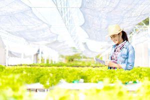 Nghề nông nhàn nhờ hệ thống canh tác thông minh