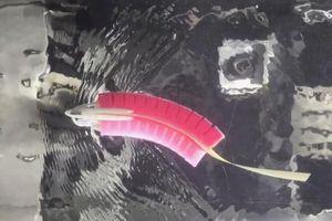 Robot cá với hệ thống cơ quan đường bên