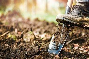 Đào được chiếc rương bí ẩn ở sân vườn, tưởng kho báu ai ngờ đụng trúng...