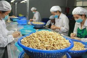 Phát huy lợi thế ngành điều Việt Nam