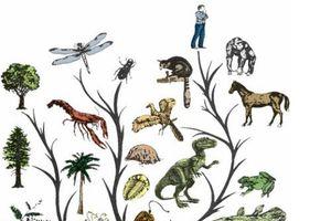 Vì sao sự tiến hóa làm cho sinh vật thông minh hơn?