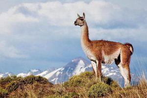 Top 10 công viên quốc gia đẹp nhất thế giới