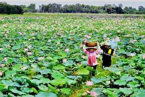 Bulgaria tài trợ gần 1 tỉ đồng cho dự án tạo sinh kế từ hoa sen Việt