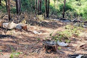 Xử lý trách nhiệm 4 chủ rừng ở Lâm Đồng