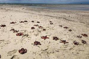 Đừng vô tâm với môi trường biển!