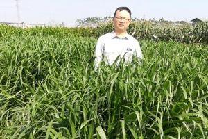Công bố lưu hành các giống cỏ chăn nuôi lâu năm trồng bằng hạt