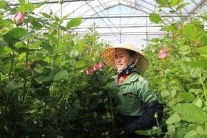 Đề xuất nhiều giải pháp thiết thực nhằm phát triển ngành hoa Lâm Đồng