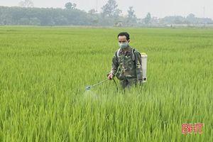 Chủ tịch UBND tỉnh Hà Tĩnh chỉ đạo phòng trừ bệnh đạo ôn cổ bông hại lúa