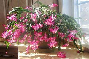 10 loại cây nên trồng trong nhà để hút bức xạ wifi, lọc sạch không khí và tăng tuổi thọ