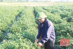 Huyện Thiệu Hóa đẩy mạnh liên kết sản xuất nông nghiệp