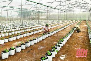 Huyện Ngọc Lặc phát triển các loại cây ăn quả